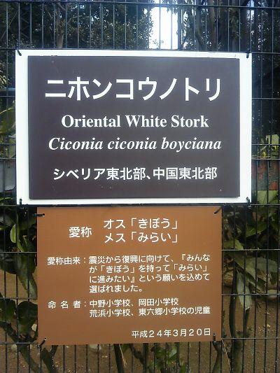 仙台市八木山動物公園で『ニホンコウノトリ』の愛称命名式